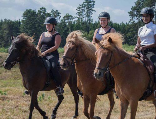 NYHED – Ridelejr for voksne!